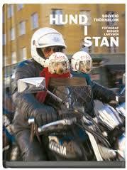 hund i stan